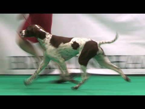 Birmingham National 2015 - Gundog group FULL