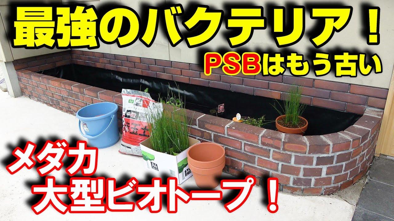 【メダカ】大型ビオトープの植栽は楽しい!が、・・・まさかの大失敗!