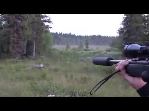 Случаи!Охота на медведя