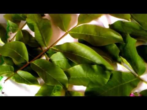 Лечение псориаза чёрным орехом