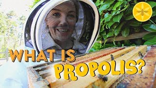 What is Propolis? (and mummified mice?!) | Beekeeping with Maddie
