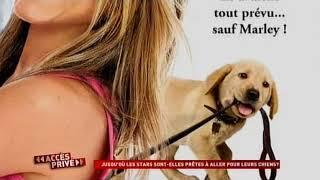 Une vie de chien... de luxe !
