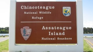CHINCOTEAGUE National Wildlife Refuge & Beach at Assateague Island Seashore