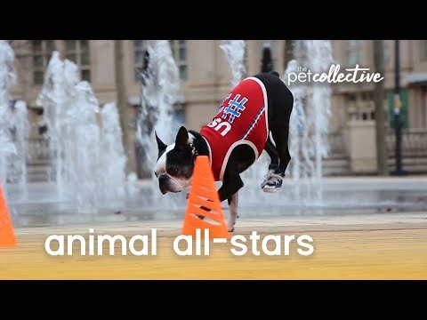 Animal All-Stars | The Pet Collective