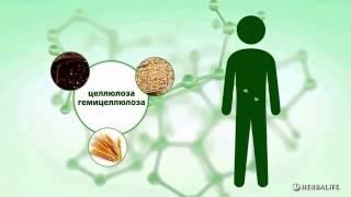 Гербалайф Основы сбалансированного питания  Клетчатка