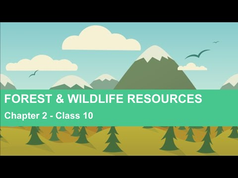 Forest and Wildlife Resources - Chapter 2 Geography NCERT Class 10