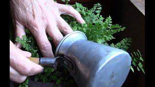 видео Кофейная гуща как удобрение: для каких растений и цветов на даче подходит спитый кофейный жмых