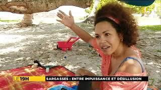 Martinique : avant la venue de Nicolas Hulot (Sargasses)
