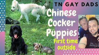 Cocker Spaniel & Chinese Crested PuppiesChinese Cockers|First Time Outside|TNGayDads