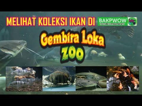 Aneka Jenis Ikan Hias dan Predator di Gembira Loka Zoo ...