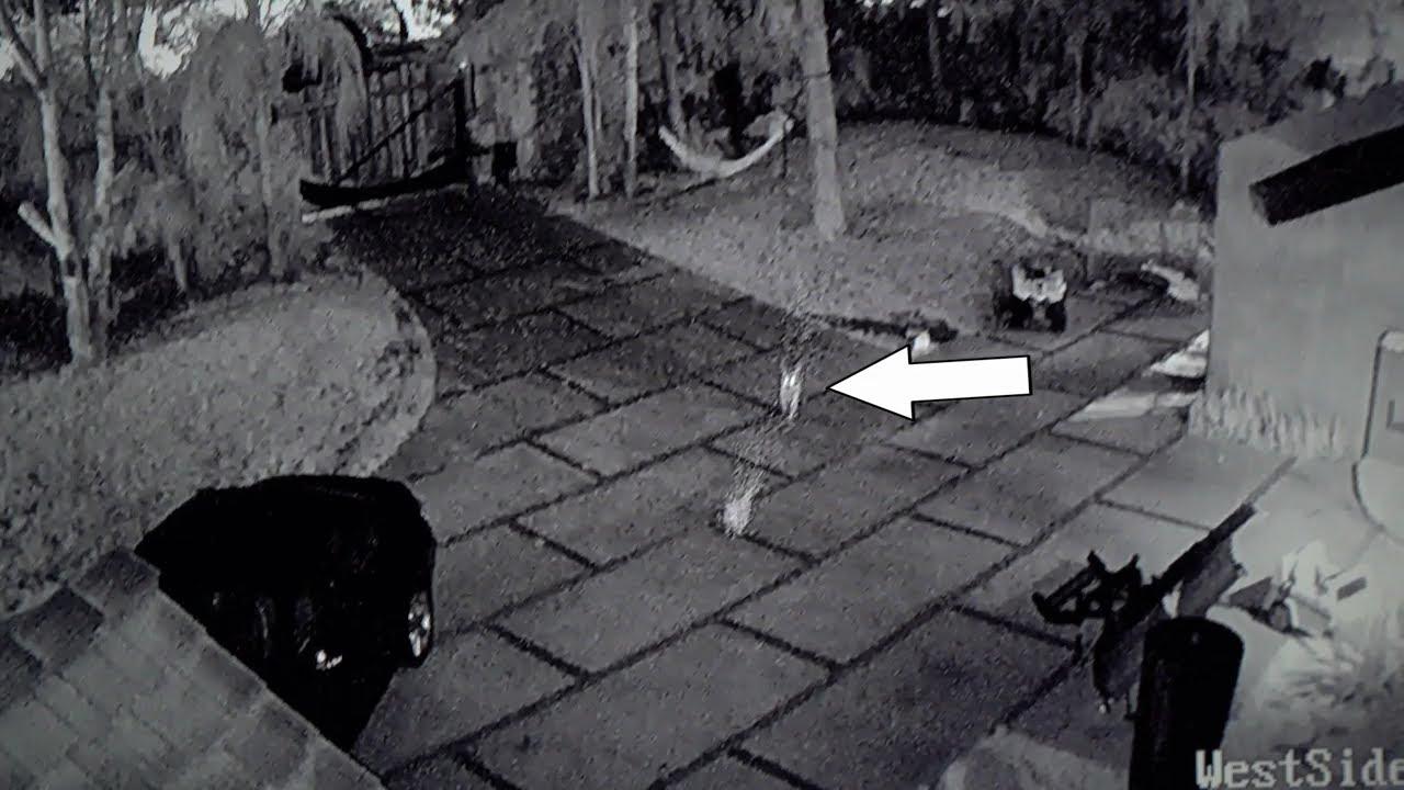 logan paul reveals kong incident  security footage   u0026 more