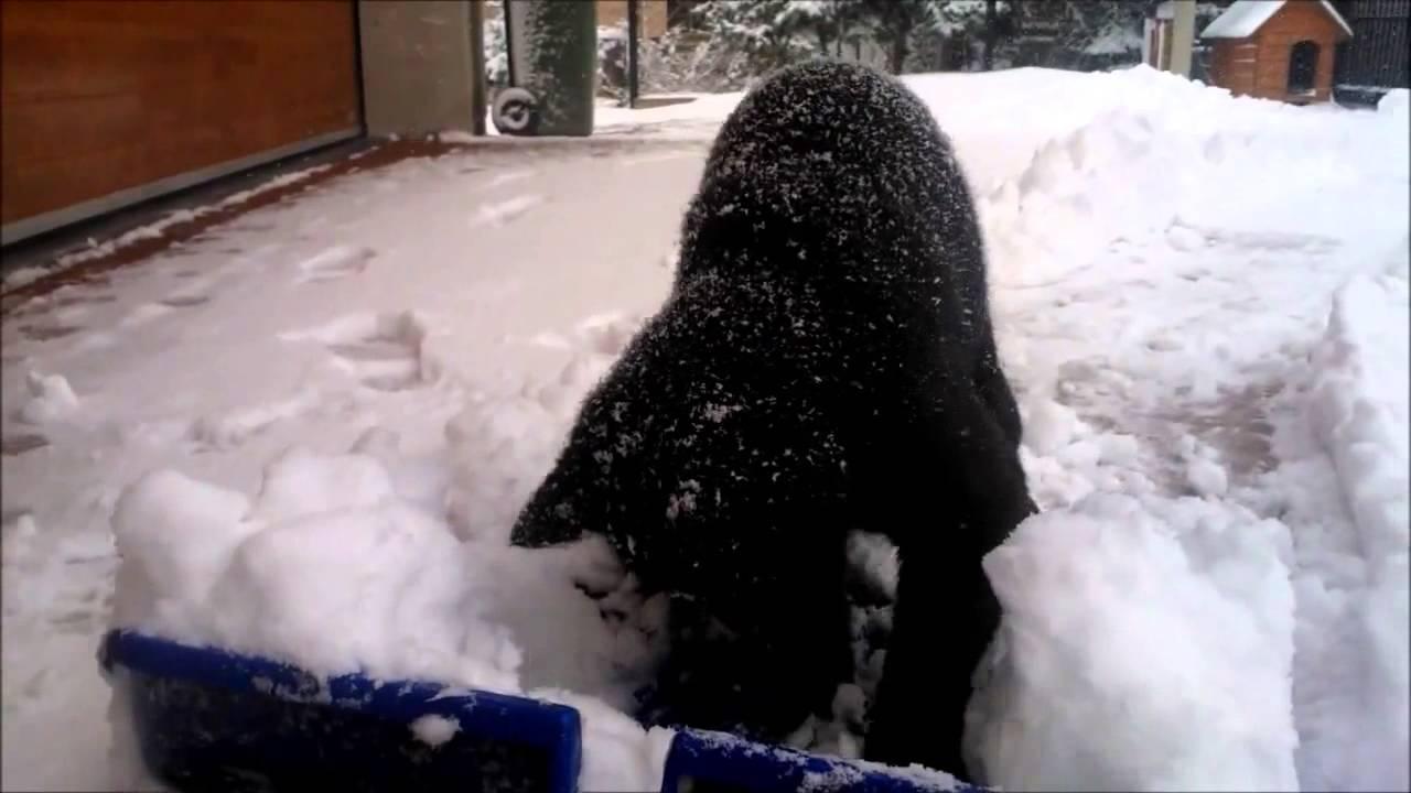 Lustige schwarze katze spielen im schnee youtube - Schneebilder kostenlos ...