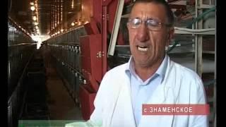Птицефабрика в Знаменске Чечня.(Комментарии к видео доступны на http://www.groztrk.net Хрупкий и живой товар в бережных руках знаменских птицеводов...., 2012-08-15T07:33:39.000Z)