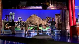 David Letterman - Jungle Jack Hanna's Camel