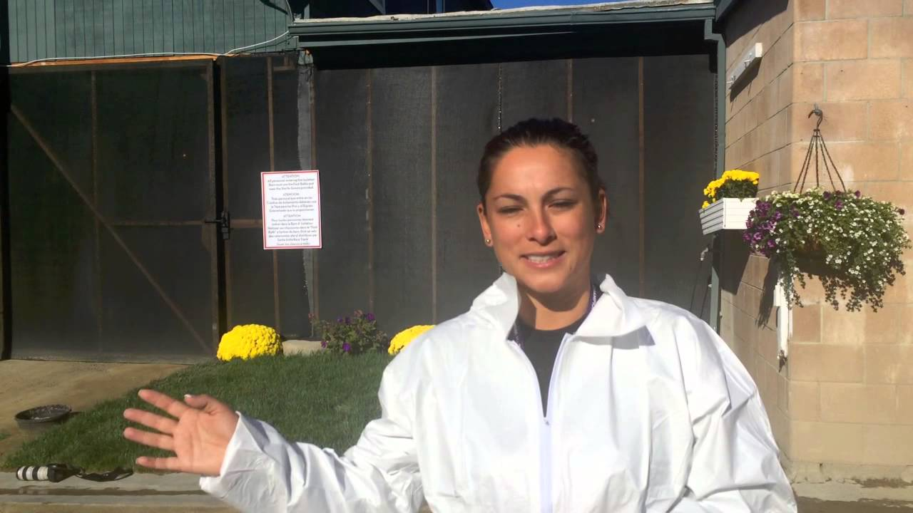 Michelle Yu Takes Us Into The Quarantine Barn Youtube