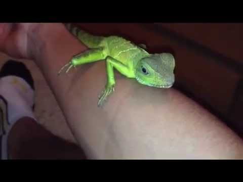 How to Tame Water Dragons