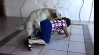 dog humping an old lady