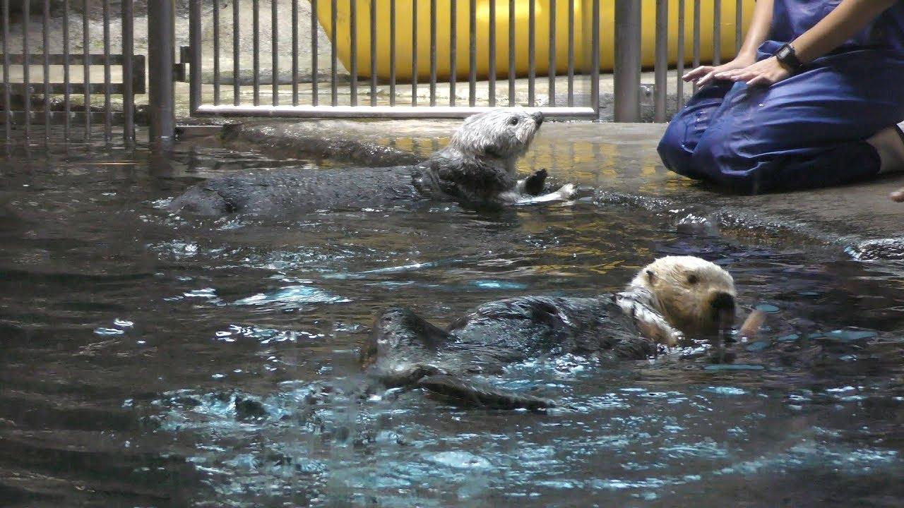 ラッコ 須磨 水族館
