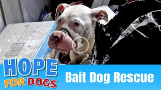 Hope Rescues Starving Bait Dog  The Dog Saviors
