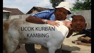 UCOK KURBAN KAMBING #GTA DYOM