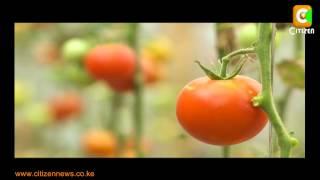 Smart Farm: Tomato Farming