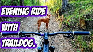 Traildog:  evening MTB ride with Pharaoh Hound