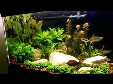How Ph Effects Plant Growth In Planted Aquariums