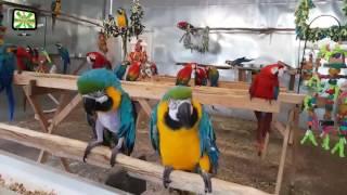 Lustige Papageien Videos 2017 🐦