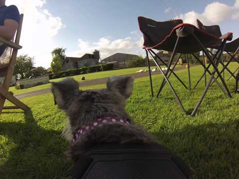 Gopro Dog Harness - Peppy at the barbeque