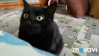 Кот атакует /cat attacks