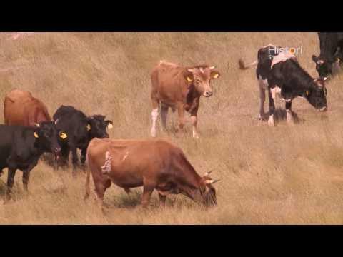 7 Springs Bio Farm - Histori Shqiptare