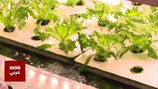 الزراعة عبر الماء -4Tech