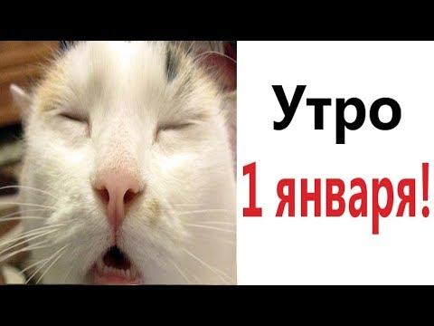 Лютые приколы. УТРО 1 ЯНВАРЯ!!! САМОЕ смешное видео! Засмеялся проиграл! - Domi Show!