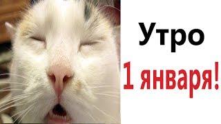 Лютые приколы УТРО 1 ЯНВАРЯ САМОЕ смешное видео Засмеялся проиграл Domi Show