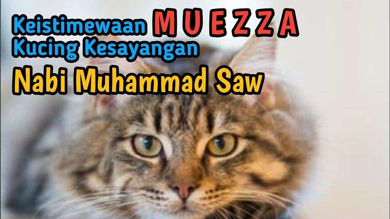 Kisah Mueeza Kucing Kesayangan Rosulullah Youtube