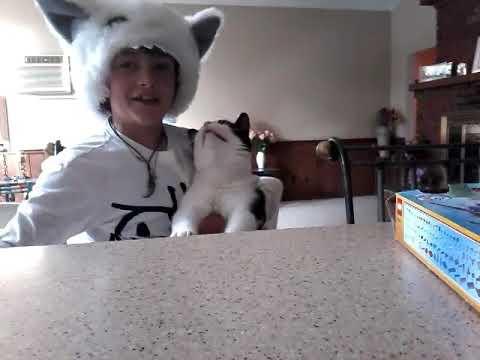 Evil cat attack