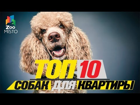 Карликовые породы собак, которые лучше не заводить: топ 5