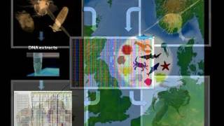DNA Barcoding of the North Sea Zooplankton - WCMB 2011.mpg