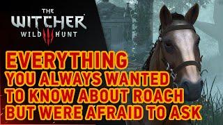 The Witcher 3: Wild Hunt - Roach