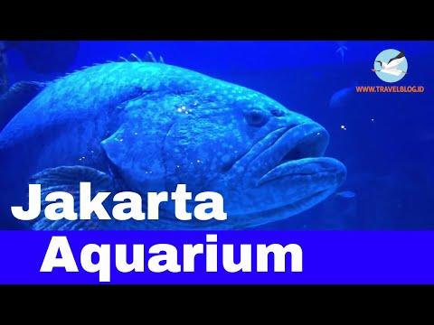 Ikan Raksasa Di Jakarta Aquarium Neo Soho Youtube