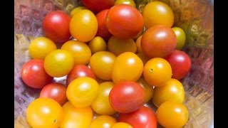 ►Cherry Tomato Balcony Gardening►