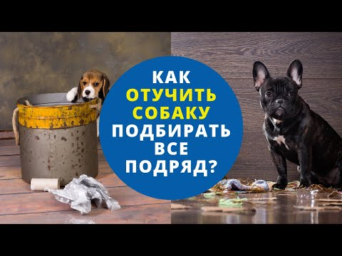 1 урок. Как отучить собаку подбирать все подряд? Причины, почему собака подбирает с земли.