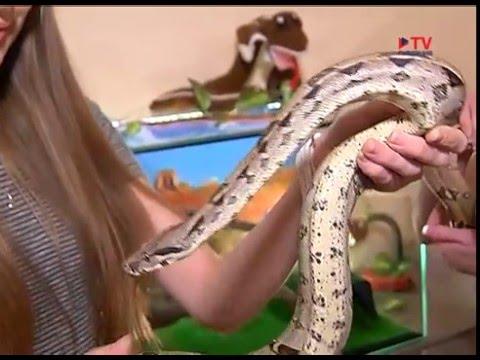Условия содержания змеи в домашних условиях 456