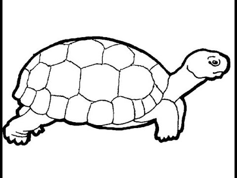 How to draw a turtle youtube