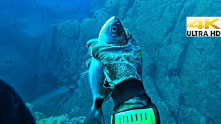 Spearfishing 🇬🇷  😲BEST HAND FISHING✋Man CATCHING FISH By HAND In The SEA ✅