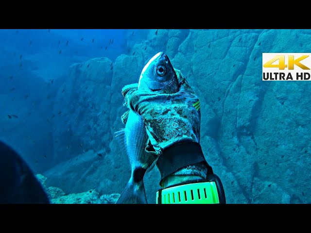 Spearfishing 🇬🇷 |BEST HAND FISHING😲Man CATCHING FISH By HAND✋In The SEA [4Κ] ✅