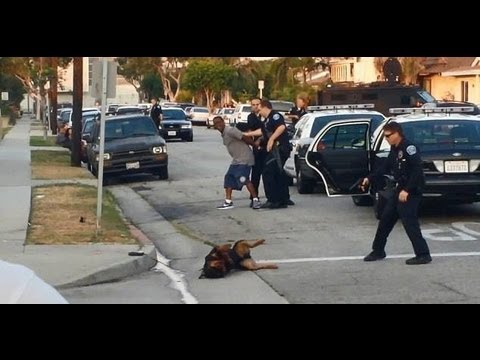 hawthorne ca police kill dog discredit themselves with