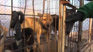 Closing the dog meat farms in South Korea