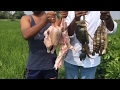 Awesome Village Food - Cooking Mixed NonVeg Curry Using Mutton, Chicken, Big Crab and Big Prawns