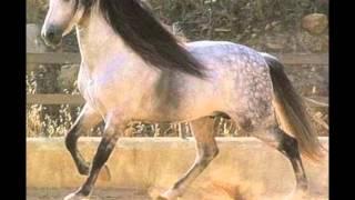 10 schönsten pferde der welt meine meinung :)